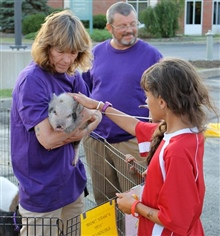 Petting Zoo Pig